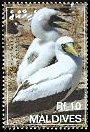 Cl: Masked Booby (Sula dactylatra) SG 4085 (2007)  [4/16]
