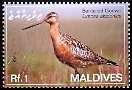 Cl: Bar-tailed Godwit (Limosa lapponica) SG 4083 (2007)  [4/16]