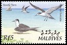 Cl: Sooty Tern (Sterna fuscata)(Repeat for this country)  SG 3669 (2002)