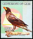 Mali <<Pique-boeuf à bec jaune>> not catalogued (2000)