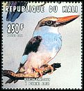 Mali <<Martin-chasseur à poitrine bleue>> not catalogued (1996)