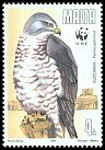 Cl: European Honey-buzzard (Pernis apivorus) <<Kuccarda>>  SG 898 (1991) 250