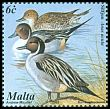 Cl: Northern Pintail (Anas acuta) SG 1224 (2001) 85