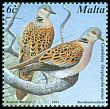 Cl: European Turtle-Dove (Streptopelia turtur) SG 1223 (2001) 85