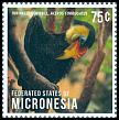 Cl: Wrinkled Hornbill (Aceros corrugatus)(Out of range)  new (2013)  [9/26]
