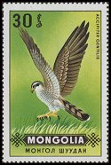 Cl: Northern Goshawk (Accipiter gentilis) SG 577 (1970) 15