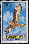 Cl: Black Kite (Milvus migrans) SG 581 (1970) 45