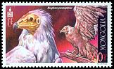 Cl: Egyptian Vulture (Neophron percnopterus) SG 2965 (2002)