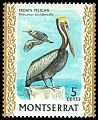 Cl: Brown Pelican (Pelecanus occidentalis) SG 246 (1970) 60