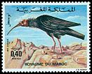 Cl: Northern Bald Ibis (Geronticus eremita) <<Ibis chauve>>  SG 426 (1975) 65