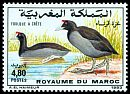 Cl: Red-knobbed Coot (Fulica cristata) <<Foulque &agrave; cr&ecirc;te>>  SG 856 (1993)