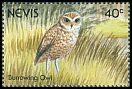 Cl: Burrowing Owl (Athene cunicularia) SG 617 (1991)