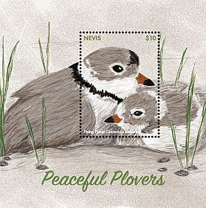 Cl: Piping Plover (Charadrius melodus) new (2017)