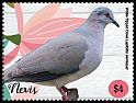 Cl: White-tipped Dove (Leptotila verreauxi)(Out of range)  new (2019)