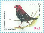 Cl: Red Avadavat (Amandava amandava)(postal stationery) (not catalogued)  (2017)  [11/99]