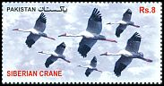 Cl: Siberian Crane (Grus leucogeranus)(Repeat for this country)  SG 1463 (2012)  [11/4]