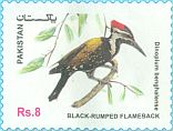 Cl: Black-rumped Flameback (Dinopium benghalense)(postal stationery) (not catalogued)  (2017)  [11/99]
