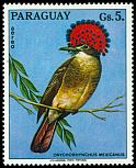 Cl: Amazonian Royal-Flycatcher (Onychorhynchus coronatus)(Out of range) (not catalogued)  (1973)