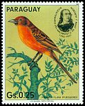 Cl: Hepatic Tanager (Piranga flava) <<Fueguero>> (not catalogued)  (1985)