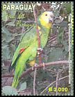 Cl: Blue-fronted Parrot (Amazona aestiva) <<Loro>> (Repeat for this country)  SG 1947 (2013) 300 [9/18]