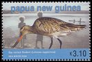 Cl: Bar-tailed Godwit (Limosa lapponica) SG 1064 (2005) 225