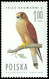 Cl: Lesser Kestrel (Falco naumanni)(Repeat for this country)  SG 2342 (1975)