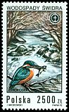 Cl: Common Kingfisher (Alcedo atthis) <<zimorodek>> (Repeat for this country)  SG 3406 (1992) 70
