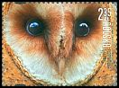 Cl: Barn Owl (Tyto alba)(Repeat for this country)  new (2015)