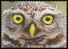 Cl: Little Owl (Athene noctua)(Repeat for this country)  new (2017)