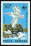 Cl: Dalmatian Pelican (Pelecanus crispus)(Repeat for this country)  SG 4899 (1984)
