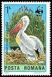 Cl: Dalmatian Pelican (Pelecanus crispus)(Repeat for this country)  SG 4900 (1984) 40