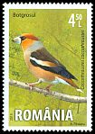 Cl: Hawfinch (Coccothraustes coccothraustes) <<Botgrosul>>  new (2015)
