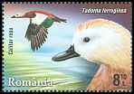 Cl: Ruddy Shelduck (Tadorna ferruginea) <<Califar rosu>>  new (2015)
