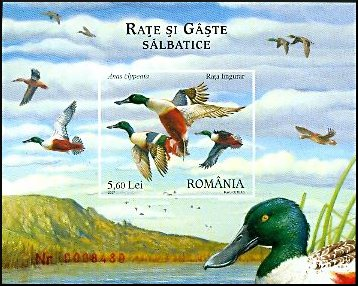 Cl: Northern Shoveler (Anas clypeata) <<Rata lingurar>> (Repeat for this country)  SG 6814b (2007)