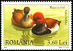 Cl: Red-crested Pochard (Netta rufina) <<Rata cu ciuf>>  SG 6812 (2007)