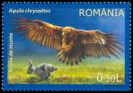 Cl: Golden Eagle (Aquila chrysaetos) <<Acvila de munte>>  SG 6984 (2009)