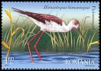 Cl: Black-winged Stilt (Himantopus himantopus) <<Piciorongul>>  SG 6946 (2009)