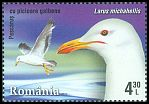 Cl: Yellow-legged Gull (Larus michahellis) <<Pescarus cu picioare galbene>>  new (2015)