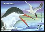 Cl: Common Tern (Sterna hirundo) <<Chira de balta>>  new (2015)