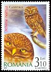 Cl: Little Owl (Athene noctua) <<Cucuveaua>>  SG 6789 (2007)