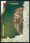 Cl: Little Owl (Athene noctua)(Repeat for this country)  new (2013)