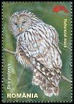 Cl: Ural Owl (Strix uralensis)(Repeat for this country)  new (2013)