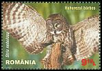 Cl: Great Grey Owl (Strix nebulosa)(Out of range)  SG 7345 (2013)  [9/6]