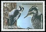 Rumania new (2013)