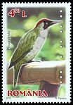 Cl: Green Woodpecker (Picus viridis) new (2015)