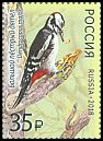 Cl: Great Spotted Woodpecker (Dendrocopos major) new (2018)  [11/38]