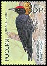 Cl: Black Woodpecker (Dryocopus martius) new (2018)  [11/38]