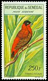 Cl: Orange Bishop (Euplectes franciscanus) <<Fransicain>>  SG 237 (1960) 900