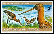 Cl: Bar-tailed Godwit (Limosa lapponica) <<Barge rousse>>  SG 585 (1976) 60
