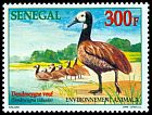 Cl: White-faced Whistling-Duck (Dendrocygna viduata) <<Dendrocygne veuf>>  SG 1598 (1999)